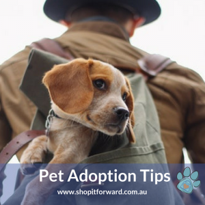 Pet Adoption Tips at Shop it Forward